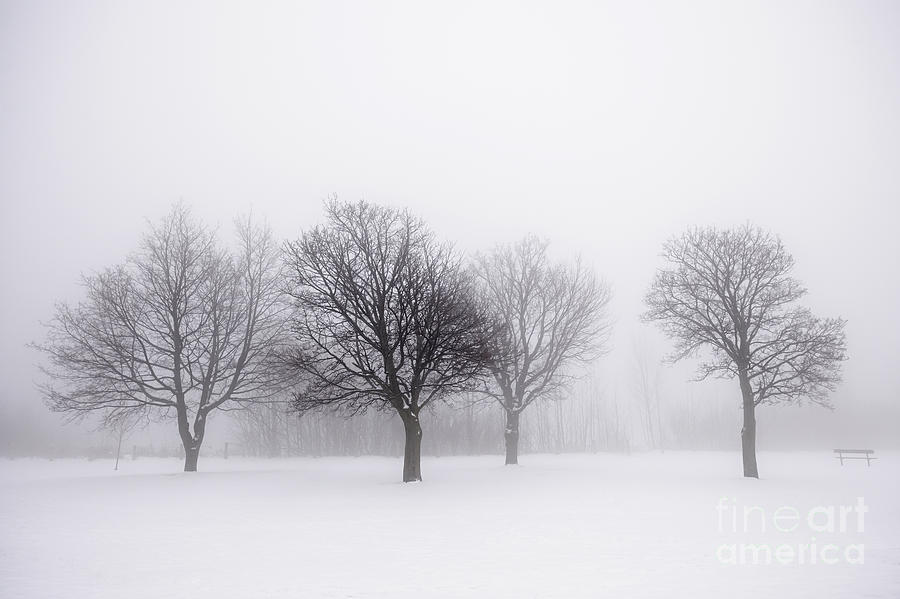 Snow Falling Wallpaper For Ipad Foggy Park With Winter Trees Photograph By Elena Elisseeva