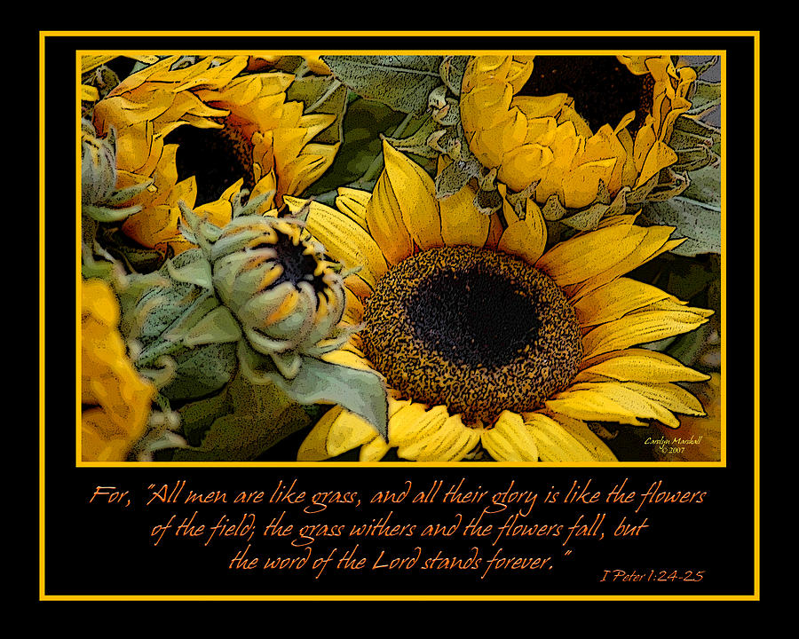 Fall Sunflowers Wallpaper Inspirational Sunflowers Photograph By Carolyn Marshall