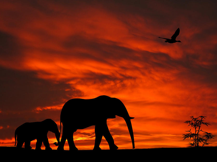 Android 3d Wallpaper Tutorial Mother And Baby Elephants Sunset Silhouette Series