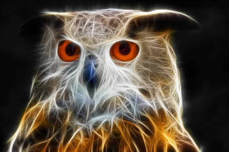 3d Wallpaper App For Iphone Owl Fractal Art Digital Art By Matthias Hauser