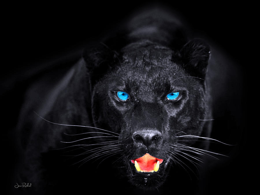 3d Live Wallpaper Android Apps Panther Digital Art By Jean Raphael Fischer