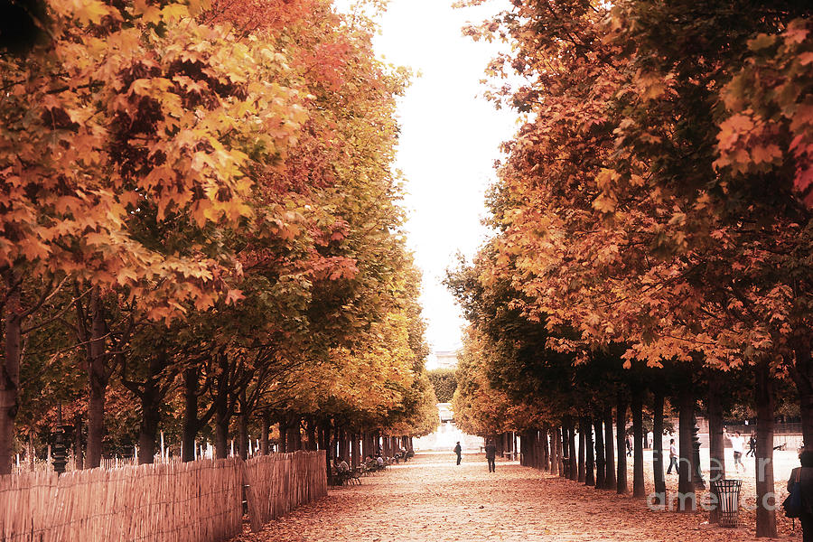 Fall Colors Mobile Wallpaper Paris Tuileries Row Of Trees Jardin Des Tuileries Autumn