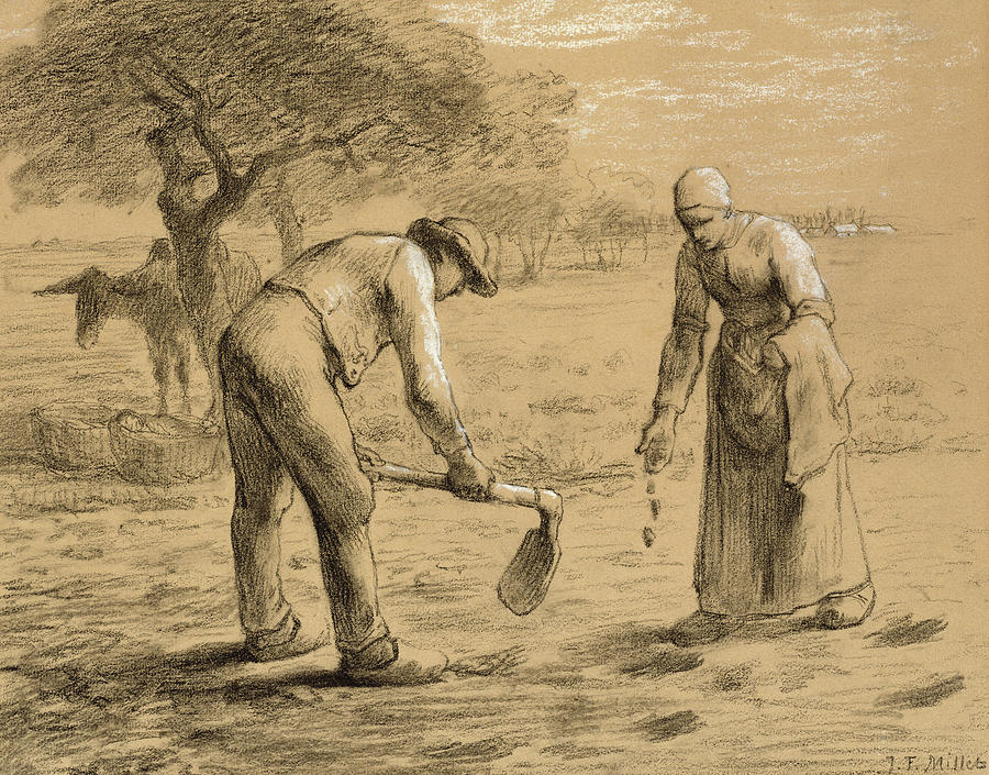 Weed Wallpaper Iphone Peasants Planting Potatoes Drawing By Jean Francois Millet