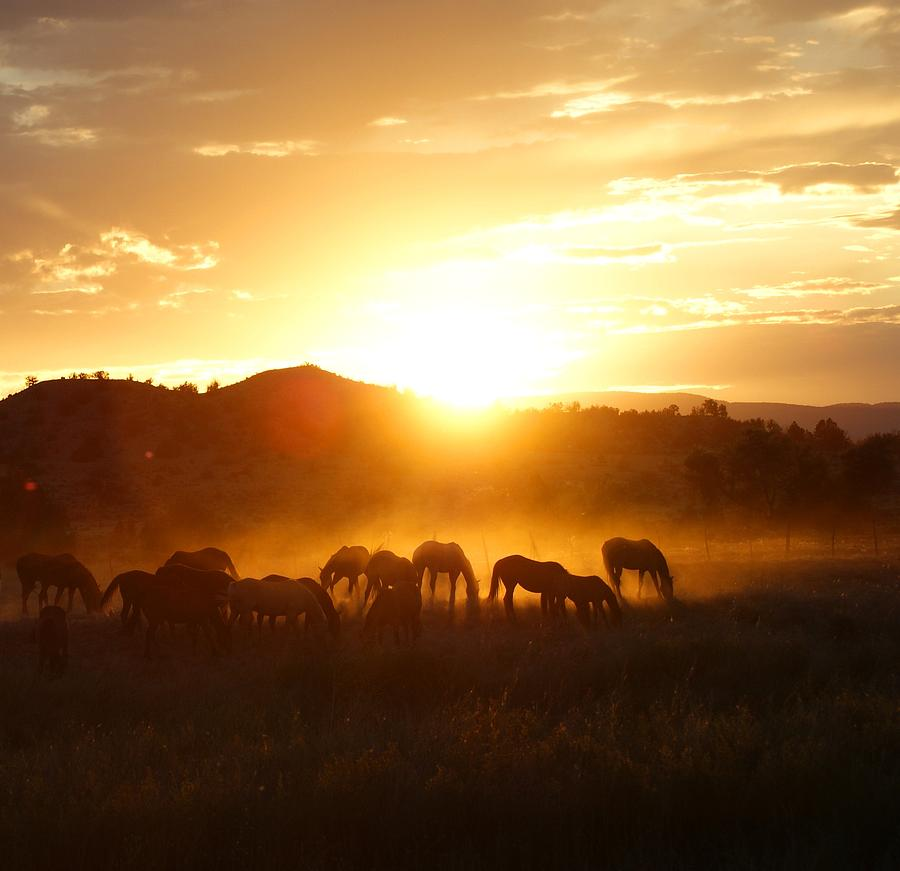 Horses In The Fall Wallpaper Ranch Sunset Photograph By Kasie Morgan
