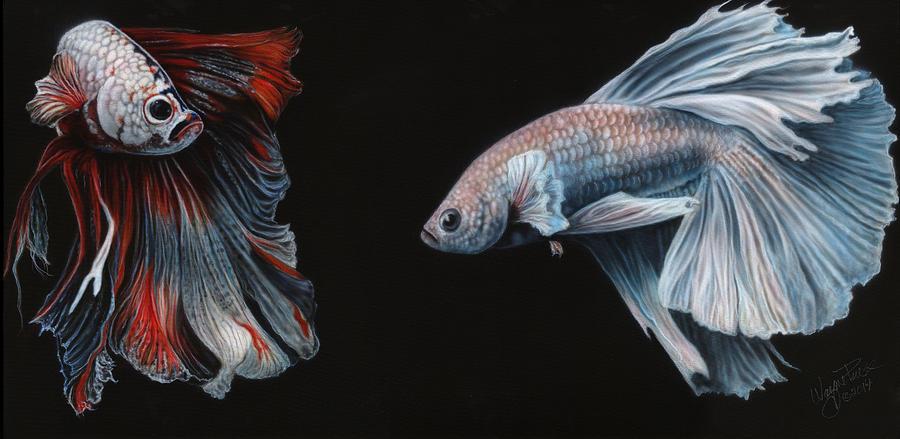 Mermaid Wallpaper Iphone Siamese Fighting Fish Painting By Wayne Pruse