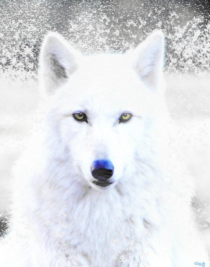 Android Animated Wallpaper For Iphone Snow Wolf Photograph By Nick Gustafson