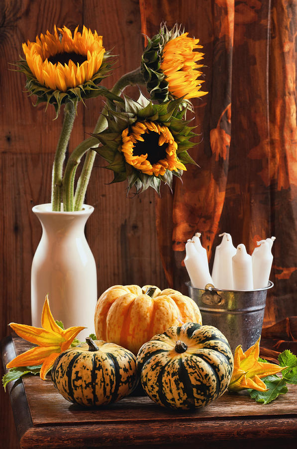 Rustic Mason Jar Fall Iphone Wallpaper Sunflower And Gourds Still Life Photograph By Amanda Elwell
