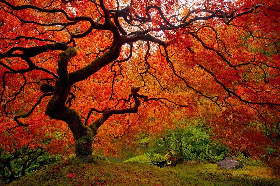 Fall Foliage Wallpaper Widescreen Tree Fire Photograph By Darren White