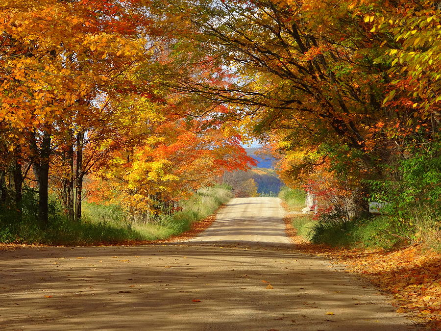 Michigan Fall Colors Wallpaper Tunnel Of Trees Photograph By Kathleen Luther