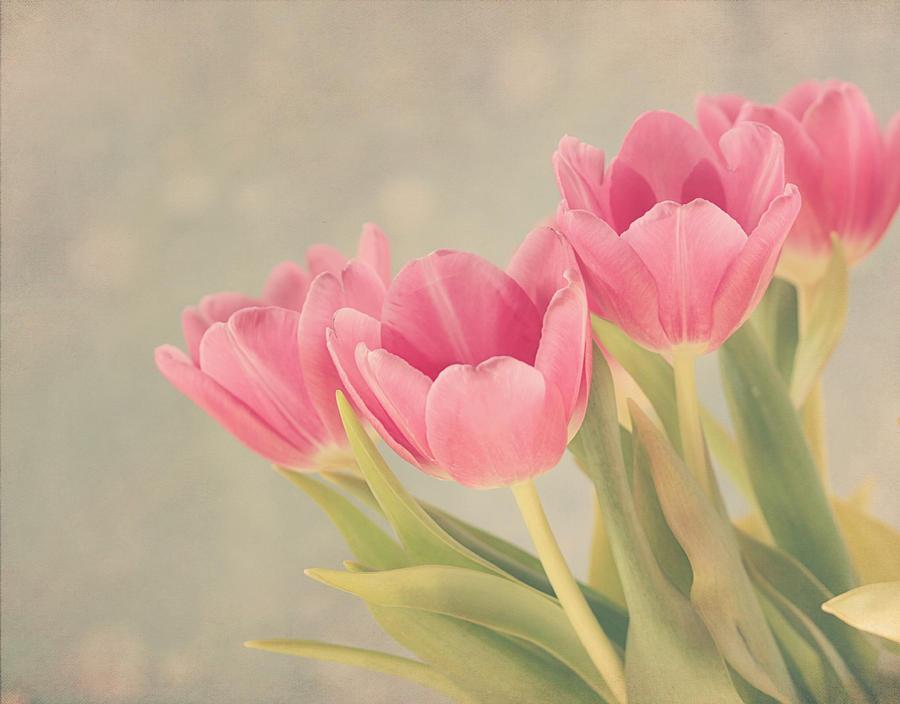 Floral Print Iphone Wallpaper Vintage Pink Tulips Photograph By Kim Hojnacki