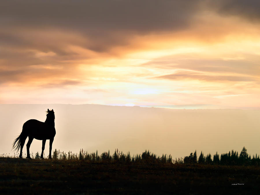 Fall Leaves Ipad Wallpaper Wild Horse Sunset Photograph By Leland D Howard