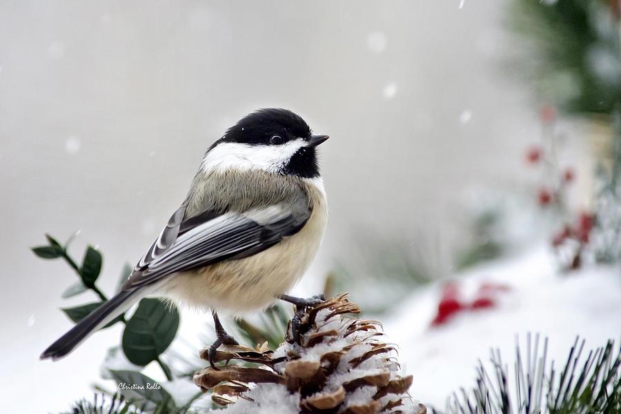 Iphone 5 Falling Snow Wallpaper Winter Chickadee Photograph By Christina Rollo