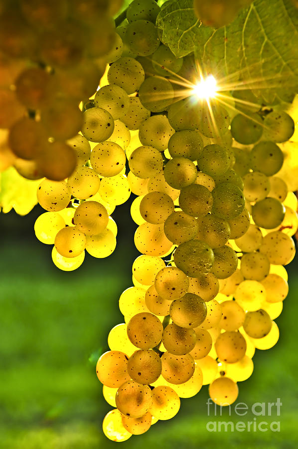 Fall Leaves Iphone 5 Wallpaper Yellow Grapes Photograph By Elena Elisseeva