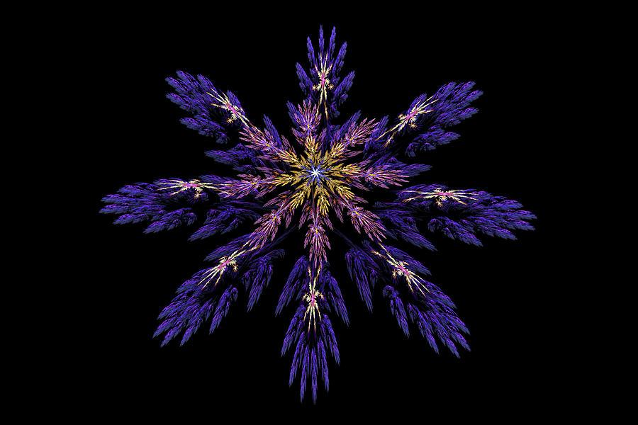 Digital Fractal Art Abstract Blue Purple Flower Image Black