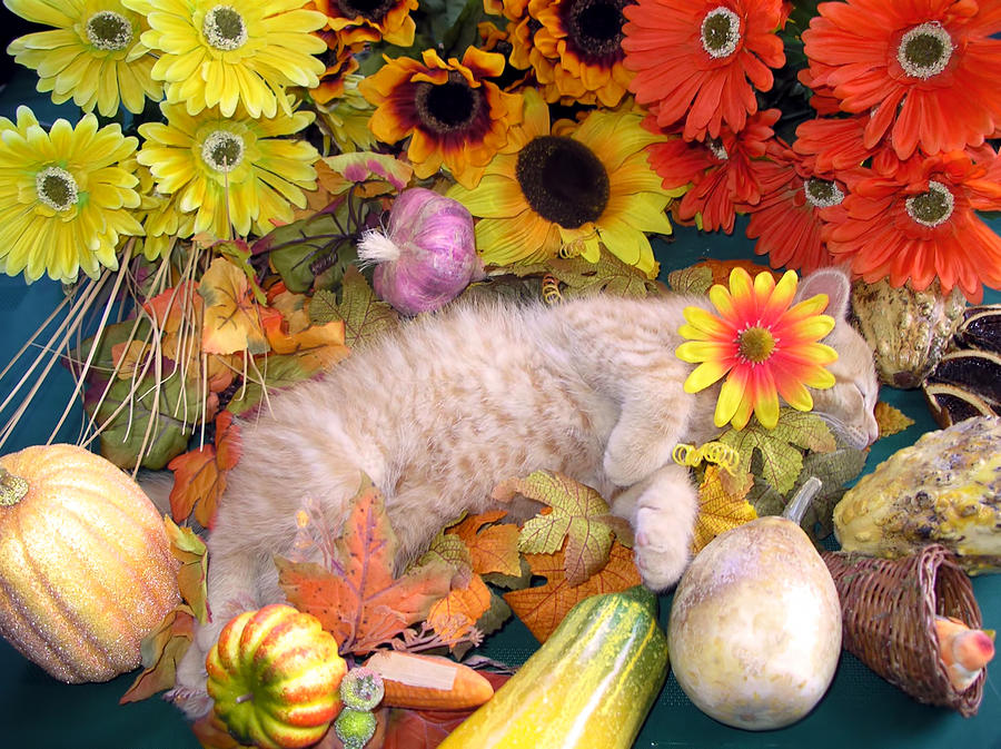 Fall Harvest Iphone Wallpaper Di Milo Flower Child Kitty Cat Kitten Sleeping In Fall