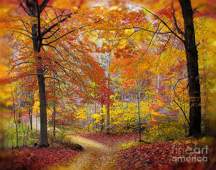 Wallpaper Images Of Fall Trees Lined Lake Soft Autumn Rain By Gina Signore
