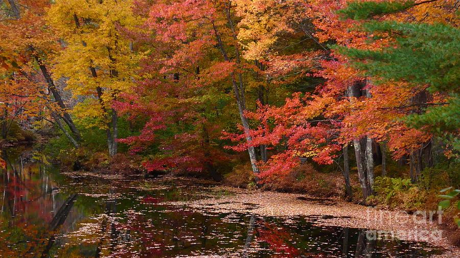 Maine Fall Foliage Wallpaper Fall In New Hampshire Photograph By Zoia Krastanova