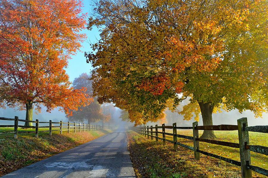 Fall Leaves Road Wallpaper Autumn Splendor Photograph By Michael Biggs