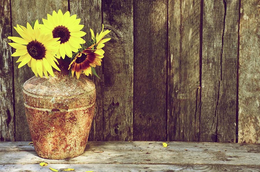 Fall Sunflower Wallpaper Autumn Sunflowers By Kelly Nelson