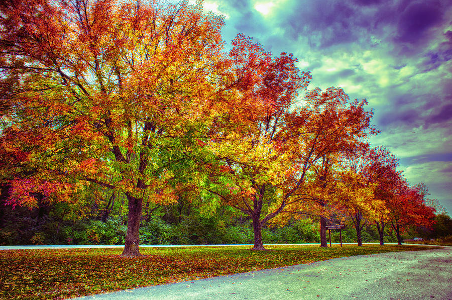 Android Wallpaper Fall Autumn Tree Line At Busch Photograph By Bill Tiepelman