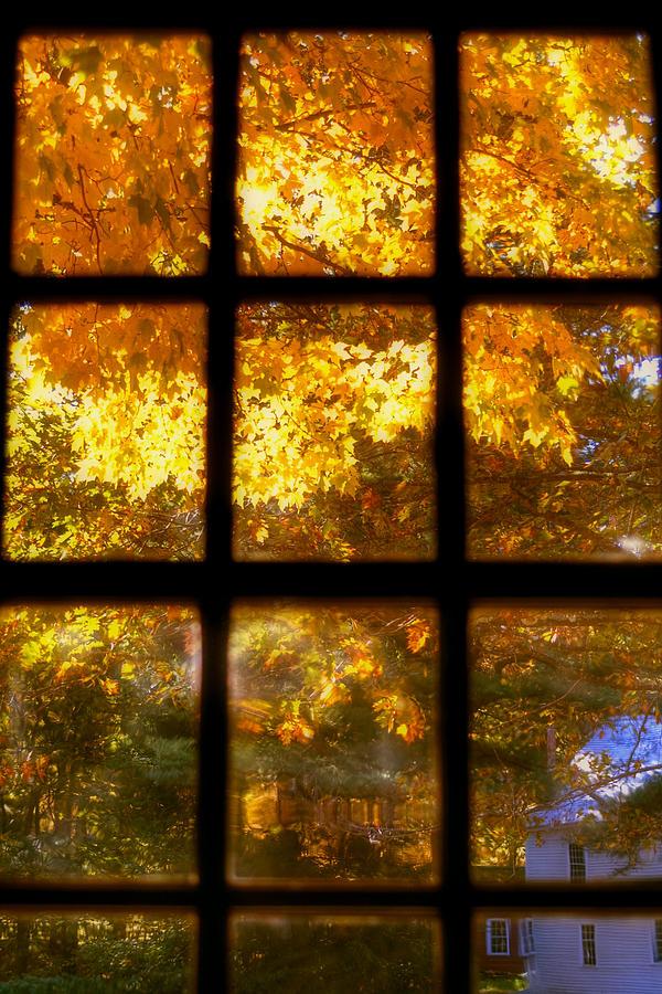3d Falling Leaves Animated Wallpaper Autumn Window 2 Photograph By Joann Vitali