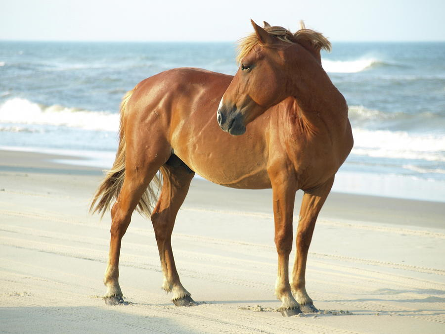 Banker Colonial Spanish Horse Animals in Trouble Pinterest - equine release form
