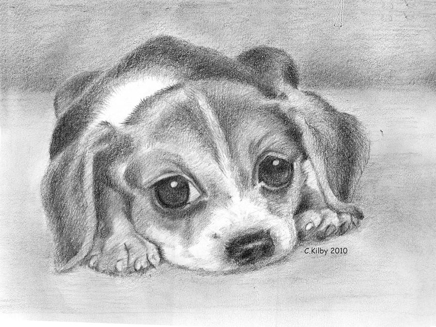 Pug Iphone Wallpaper Beagle Puppy Drawing By Claudia Kilby