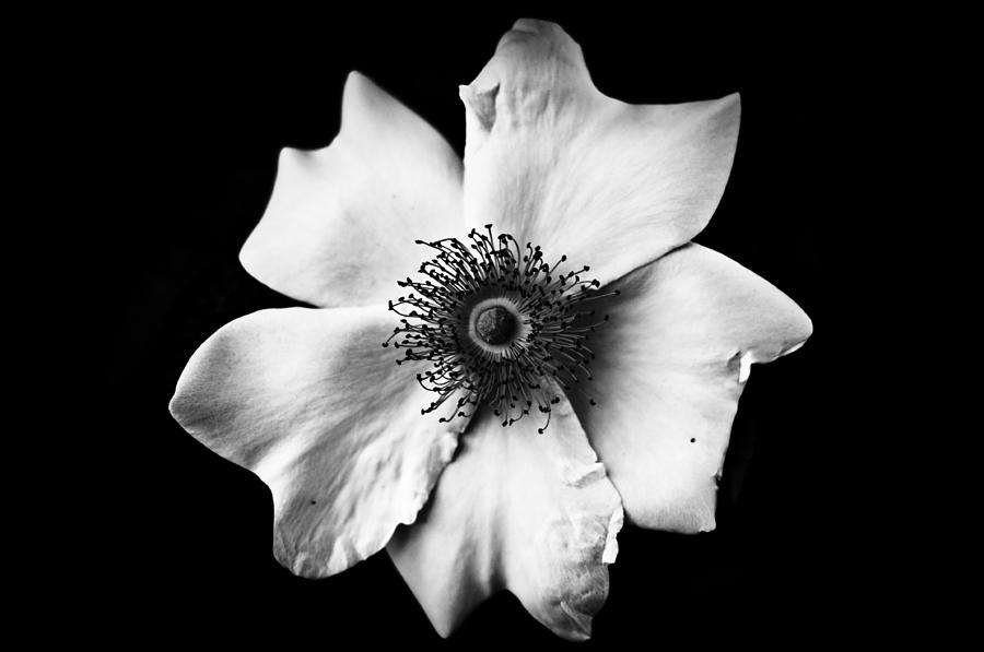 Orchid Iphone Wallpaper Black And White Flower Photograph By Mirko Chessari