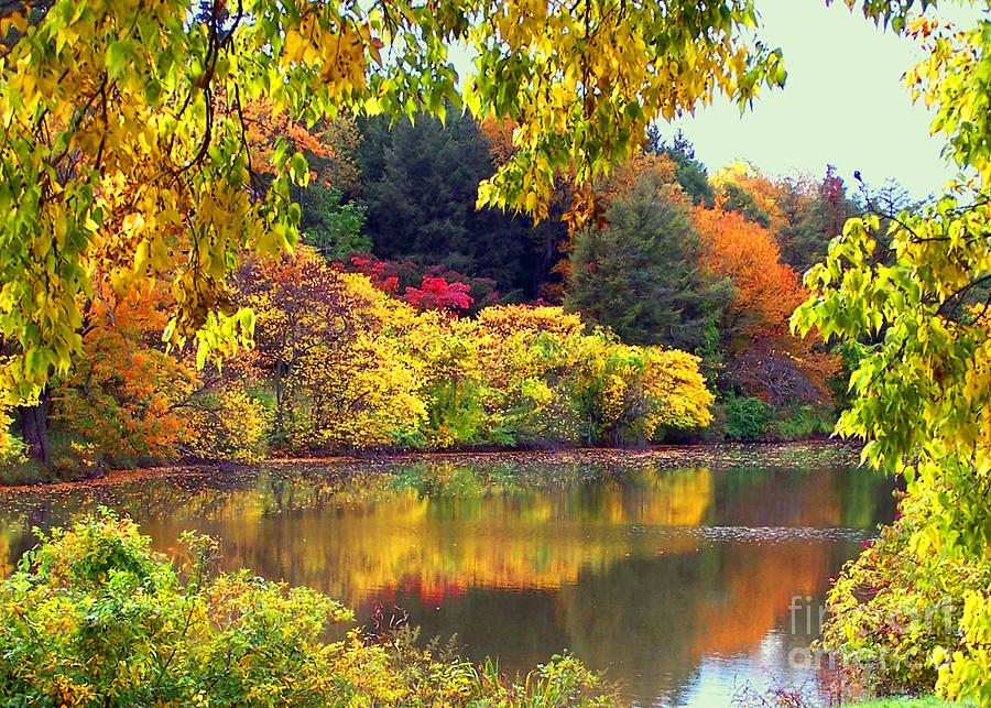 Fall Wallpaper Iphone 7 Fall Scene Photograph By Jim Okeefe