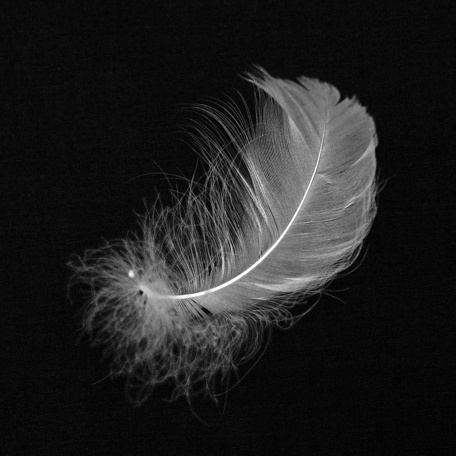 Drop Of Water Falling From A Leaf Dark Background Wallpaper Feathers On Pinterest Feather Drawing Feather Tattoos