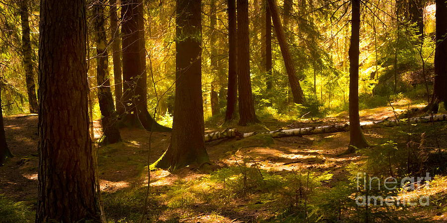 Iphone X Inside Wallpaper Hd Forest Light Photograph By Lutz Baar