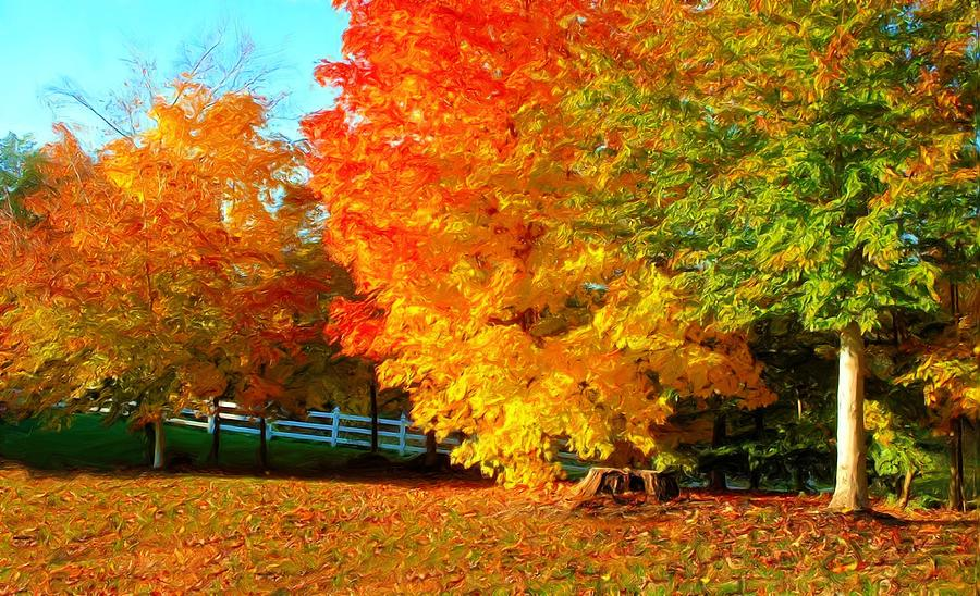 Fall Live Wallpaper Android Ohio Autumn Maples Photograph By Dennis Lundell