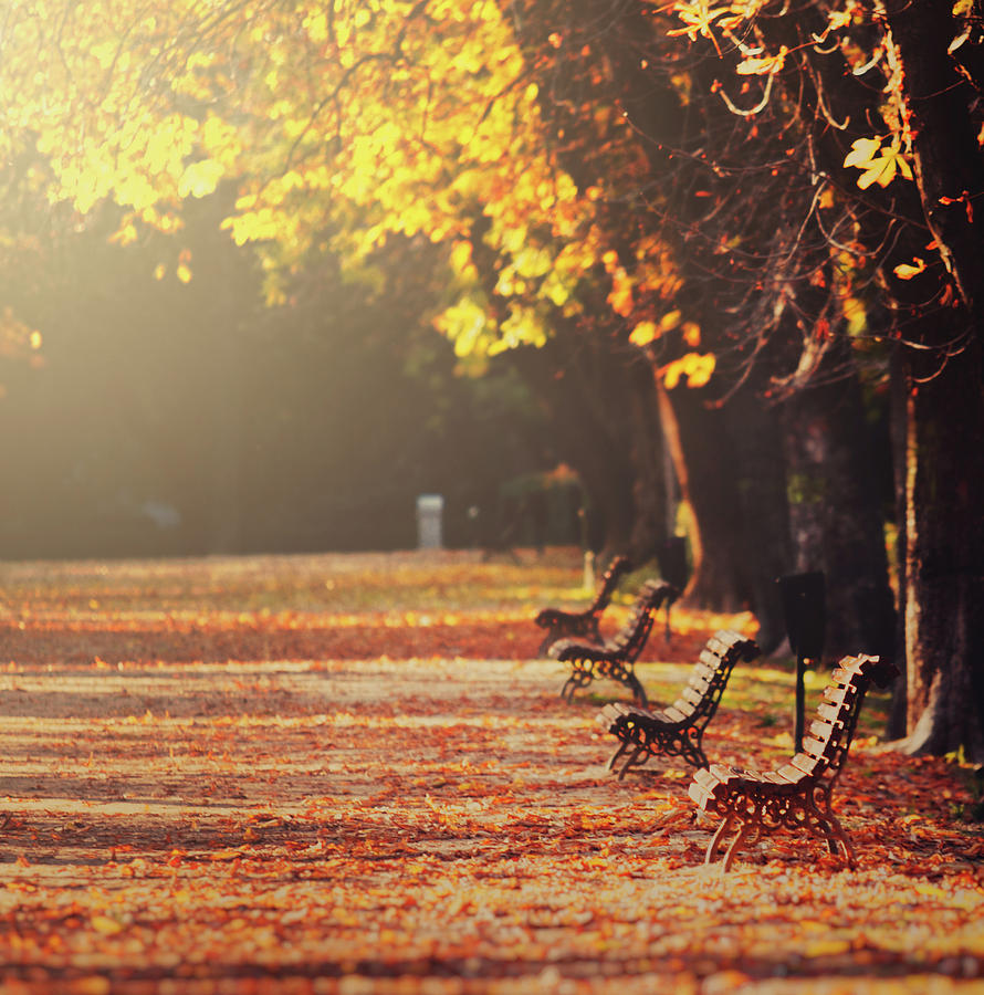 Autumn Falling Leaves Wallpaper Park Benches In Fall Photograph By Julia Davila Lampe