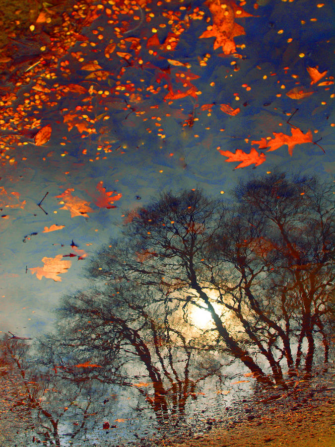 American Paint And Wallpaper Fall River The Magic Puddle By Tara Turner