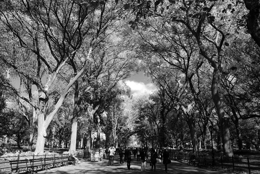 4k Central Park In The Fall Wallpaper Trees On The Mall In Central Park In Black And White