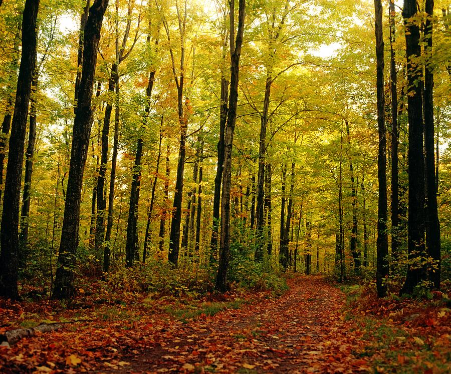 Falling Leaves Wallpaper For Iphone Trees With Autumn Leaves In The Forest Photograph By David