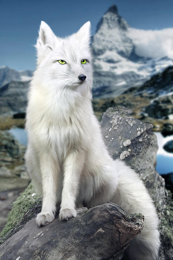 Snow Anime Wallpaper White Fox At Matterhorn Digital Art By Julie L Hoddinott