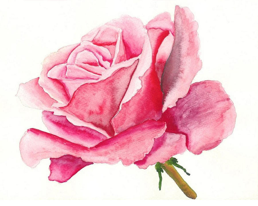 Pink Rose Painting By Robert Thomaston
