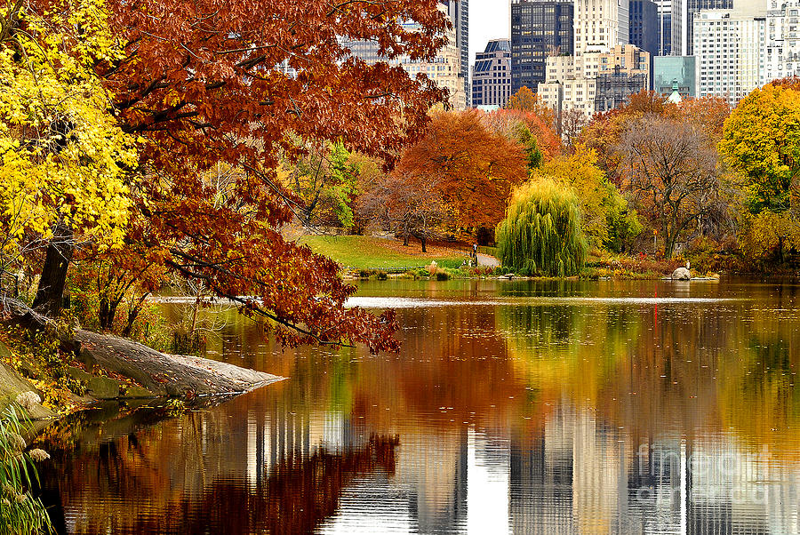 Iphone Se Fall Colors Wallpaper Autumn Colors In Central Park New York City Photograph By