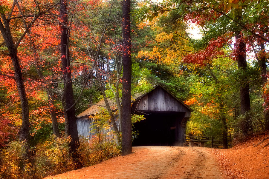 Colorful Iphone Wallpaper Autumn Wonder Photograph By Joann Vitali