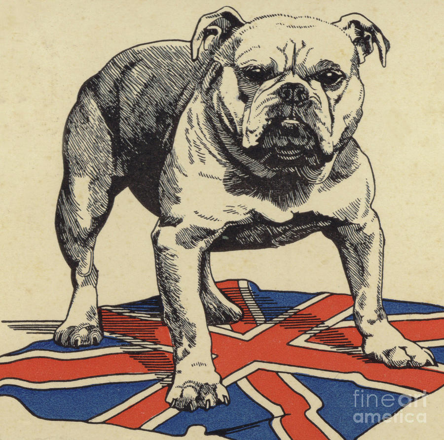 Union Jack Iphone Wallpaper British Bulldog Standing On The Union Jack Flag Drawing By
