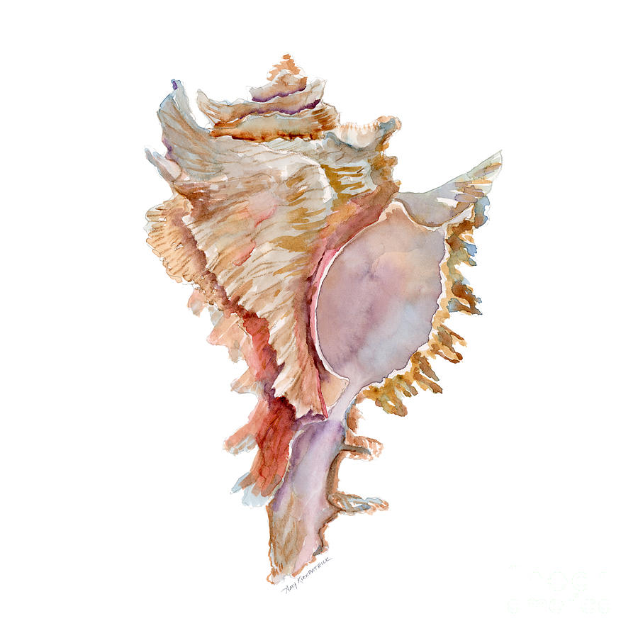 Colourful Iphone X Wallpaper Chicoreus Ramosus Shell Painting By Amy Kirkpatrick