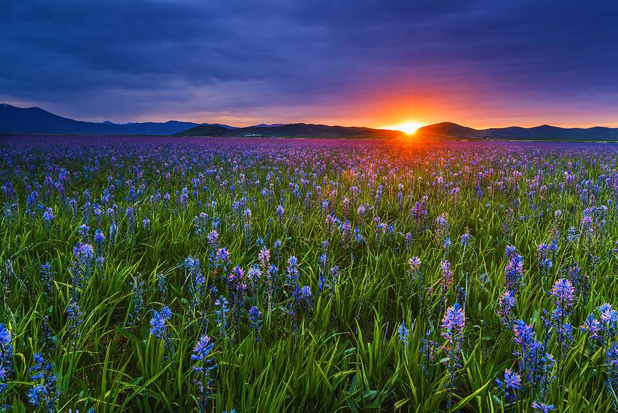 Spring Iphone 6 Wallpaper Dramatic Spring Sunrise At Camas Prairie Idaho Usa