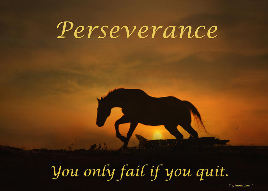 Wallpaper With Quotes Attitude Perseverance Motivational Horse In The Sunset Photograph