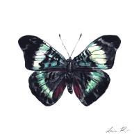 Prola Beauty Butterfly Art Butterfly Decor Wall Art ...