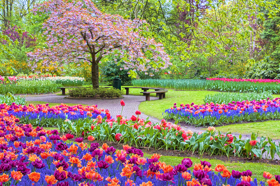 Images Of Nature Wallpaper With Quotes Spring Season Painting By Nadia Sanowar