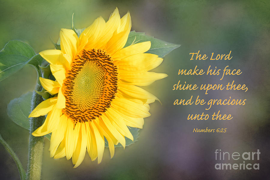 Encouraging Quotes Wallpaper Free Download Sunflower With Bible Verse Photograph By Deborah Berry