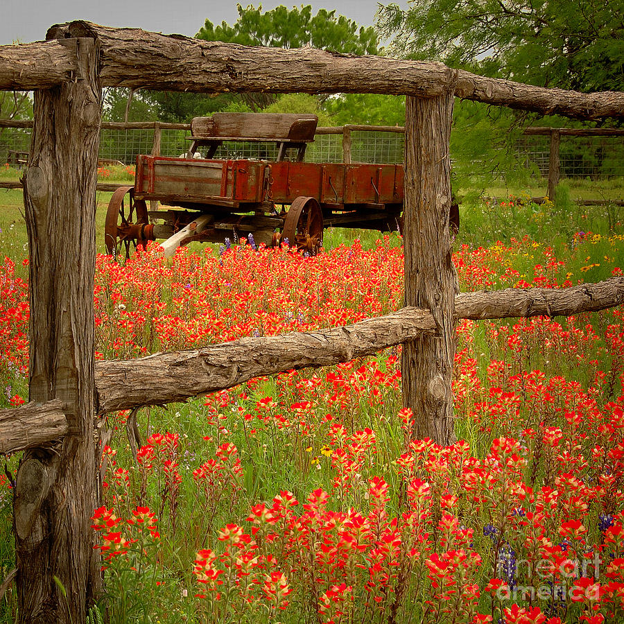 Bluebonnet Iphone Wallpaper Wagon In Paintbrush Texas Wildflowers Wagon Fence