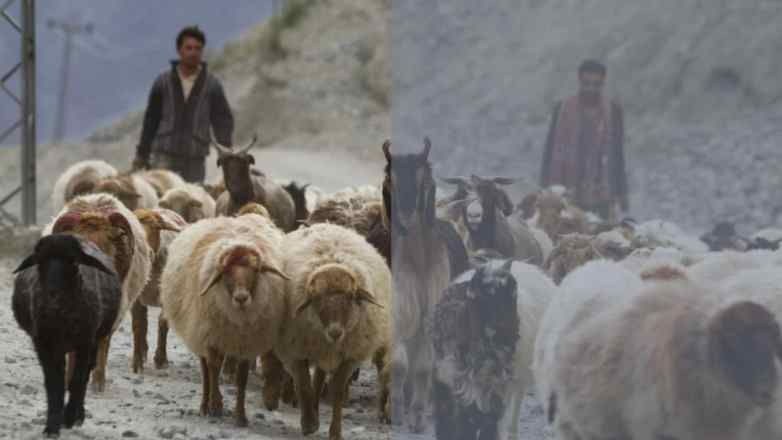 Nomadic nature of Pakistan's Bakarwals in danger, as community faces weather, administrative issues