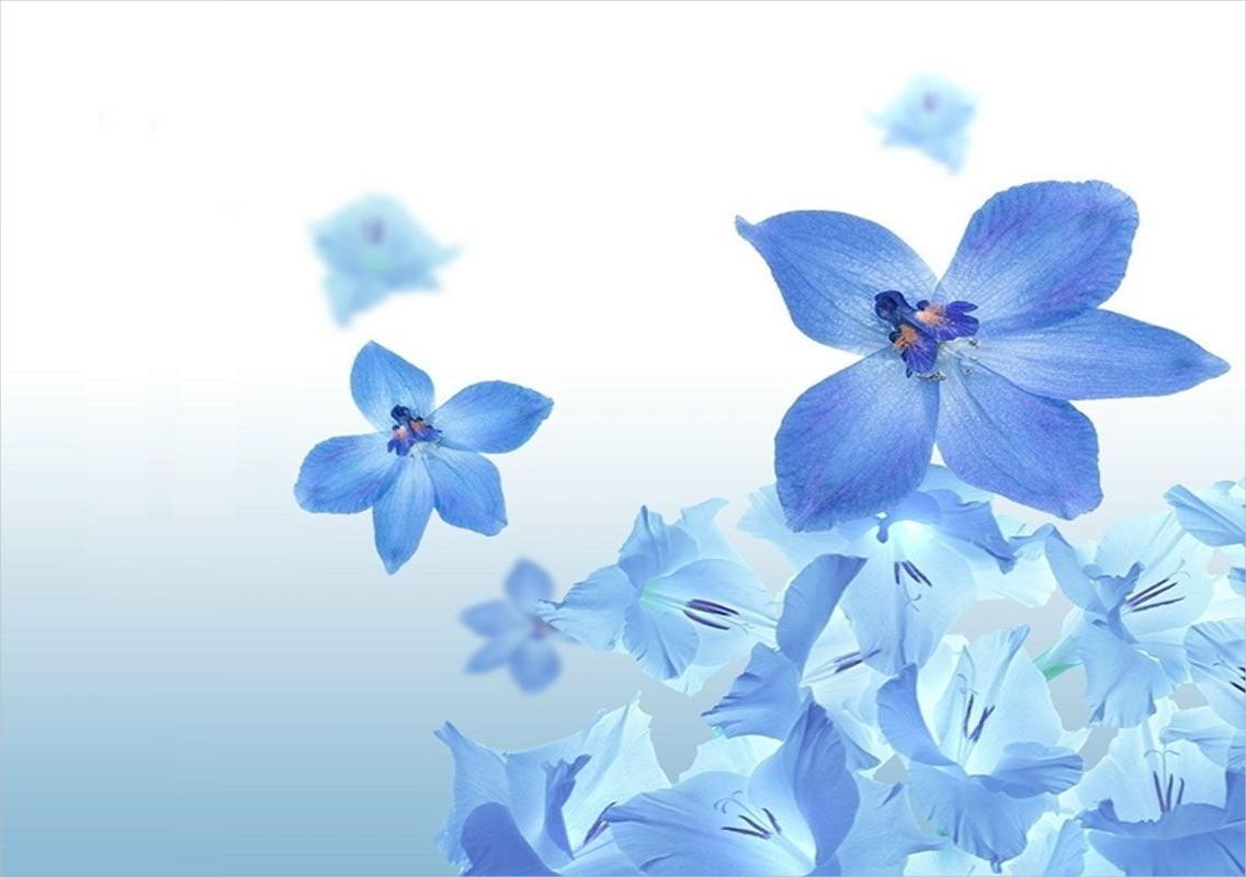 3d Money Wallpaper 20 Blue Flower Backgrounds Wallpapers Freecreatives